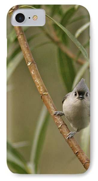 Tufted Titmouse IPhone Case by Phill Doherty
