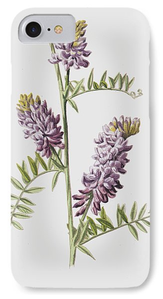 Tufted Vetch IPhone Case by Frederick Edward Hulme