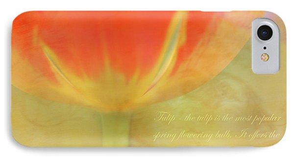 Tulip IPhone Case by Catherine Alfidi