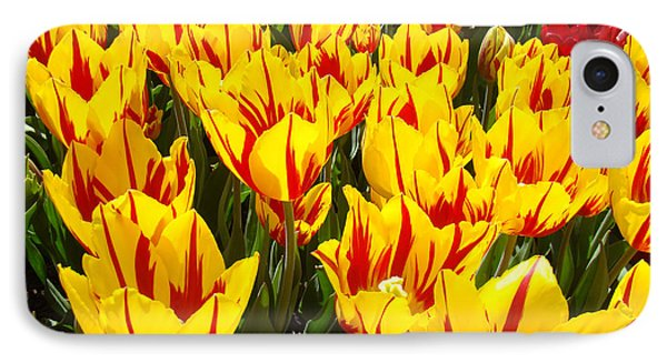 Tulip Flowers Festival Yellow Red Art Prints Tulips Phone Case by Baslee Troutman