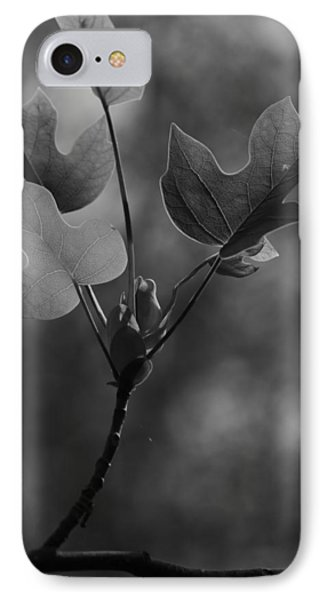 Tulip Tree Leaves In Spring IPhone Case by Jane Ford