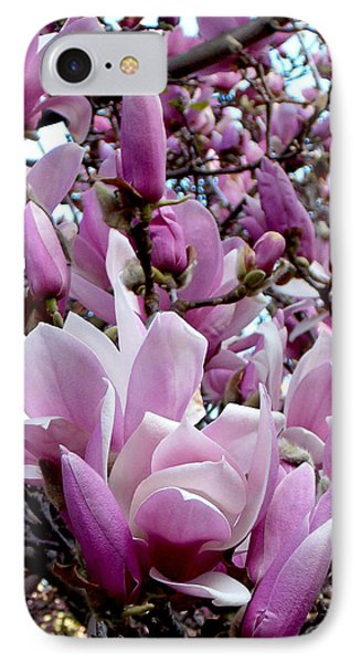 Tulip Tree IPhone Case by Mark Barclay