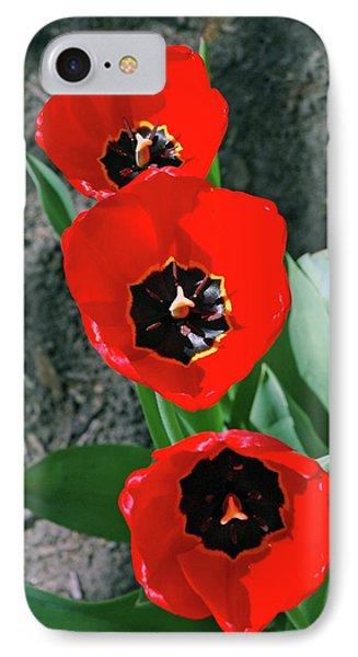 IPhone Case featuring the photograph Tulip Trio by LeeAnn McLaneGoetz McLaneGoetzStudioLLCcom