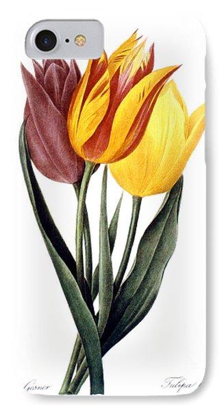 Tulip (tulipa Gesneriana) Phone Case by Granger