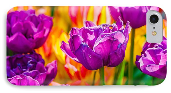 IPhone Case featuring the photograph Tulips Enchanting 41 by Alexander Senin