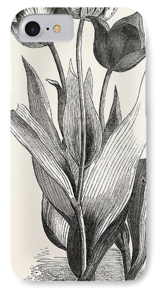 Tulips IPhone Case by English School