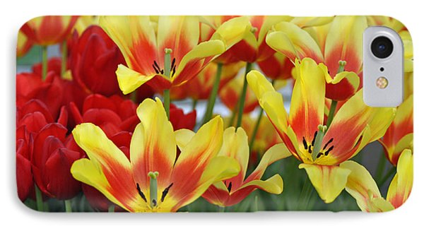 Tulips Glorious Tulip Monsella Phone Case by Debra  Miller