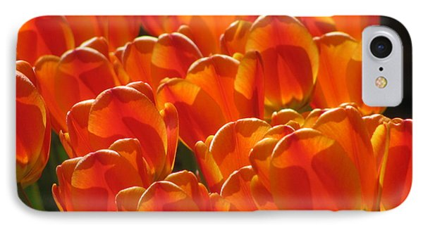 Tulips In Light IPhone Case by Alfred Ng