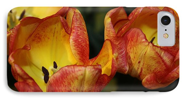 Tulips In The Morning IPhone Case by Bruce Bley