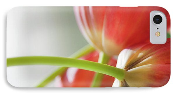 Tulips In The Morning IPhone Case by Theresa Tahara