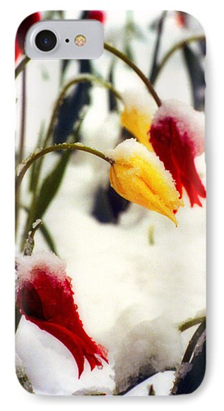Tulips In The Snow IPhone Case by James BO  Insogna