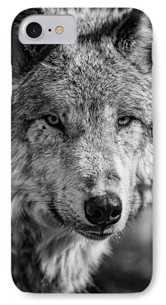 Tundra Wolf IPhone Case