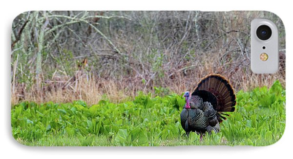 IPhone Case featuring the photograph Turkey And Cabbage by Bill Wakeley