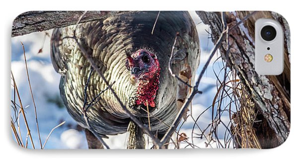 IPhone Case featuring the photograph Turkey In The Brush by Paul Freidlund