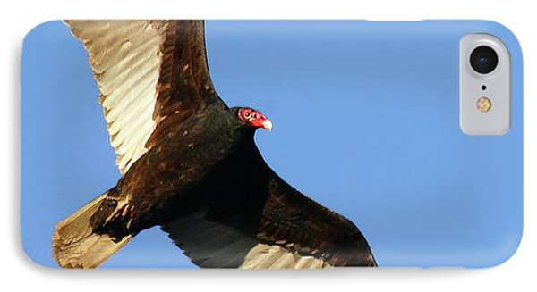 Turkey Vulture IPhone Case by Debbie Stahre