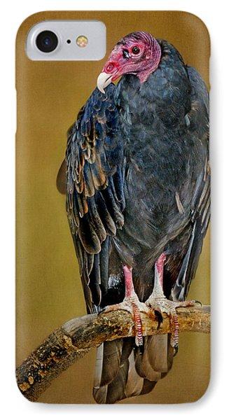 Turkey Vulture IPhone Case by Nikolyn McDonald