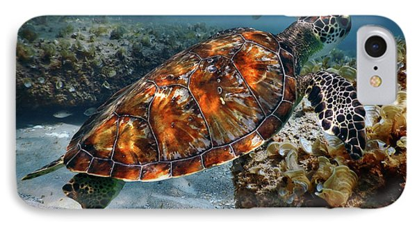 Turtle And Shark Swimming At Ocean Reef Park On Singer Island Florida IPhone Case by Justin Kelefas