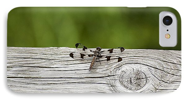 Twelve Spotted-skimmer 20120703_213a IPhone Case by Tina Hopkins