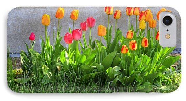 Twenty-five Tulips IPhone Case