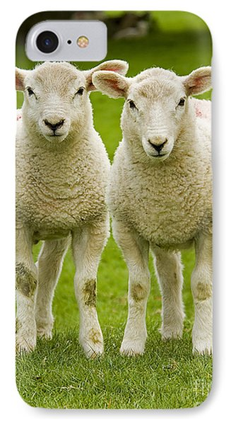 Twin Lambs IPhone Case by Meirion Matthias