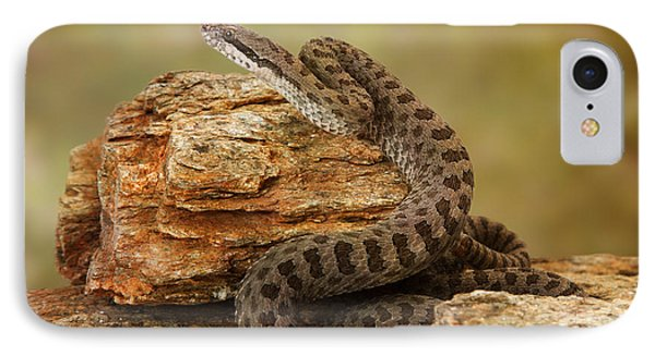 Twin-spotted Rattlesnake On Desert Rocks IPhone Case by Susan Schmitz