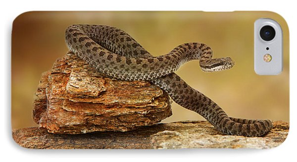 Twin-spotted Rattlesnake On Top Of Rock IPhone Case by Susan Schmitz