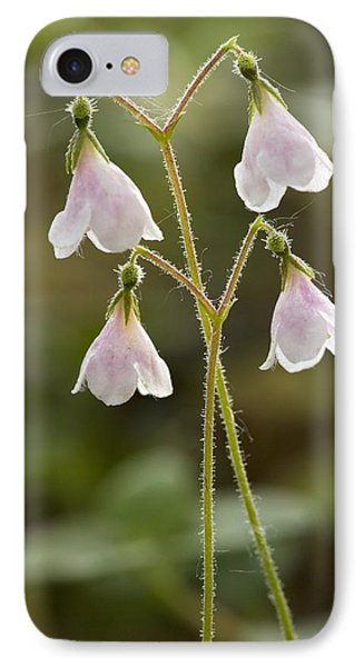 Twinflower (linnaea Borealis) Phone Case by Bob Gibbons