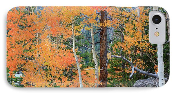 IPhone Case featuring the photograph Twisted Pine by David Chandler