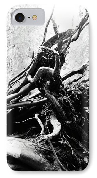 Twisted Tree Trunk In Hoh Rainforest IPhone Case by Dan Sproul