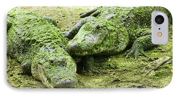 Two Alligators IPhone Case by Garry Gay
