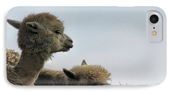 Two Alpaca IPhone Case by Pat Cook