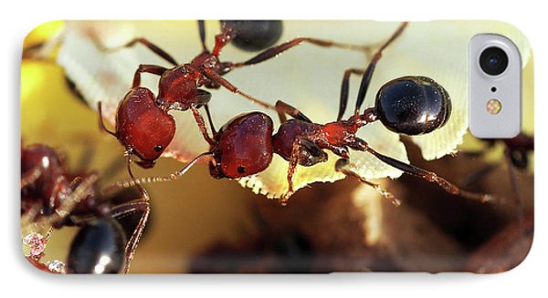 Two Ants In Sunny Day IPhone Case