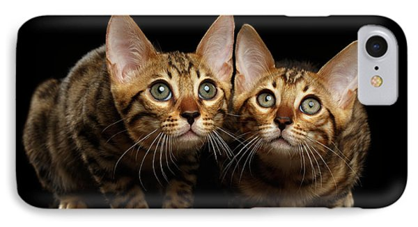 Two Bengal Kitty Looking In Camera On Black IPhone Case by Sergey Taran