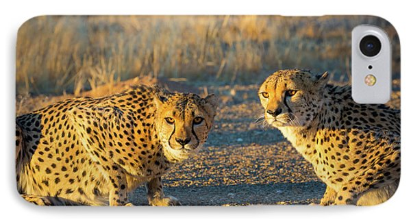 Two Cheetahs IPhone Case by Inge Johnsson