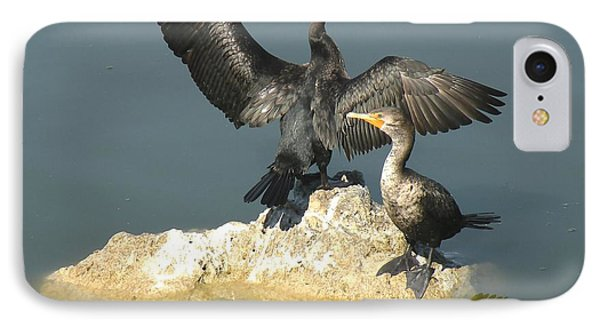 Two Cormorants IPhone Case by Rosalie Scanlon