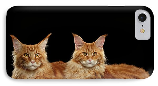 Two Ginger Maine Coon Cat On Black IPhone Case by Sergey Taran