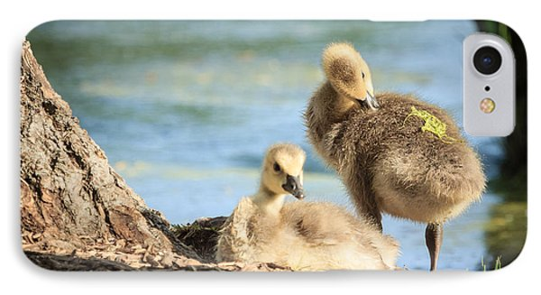Two Little Goslings IPhone Case by Joni Eskridge