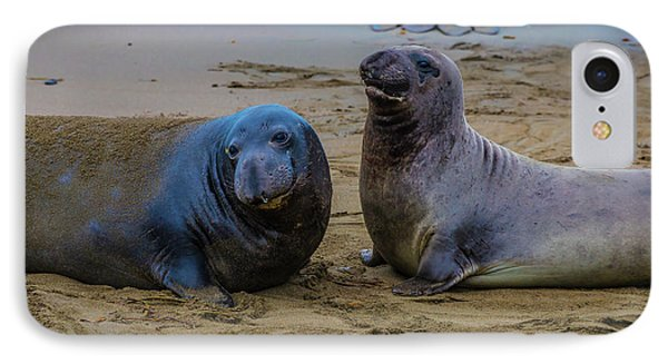 Two Male Elephant Seals IPhone Case