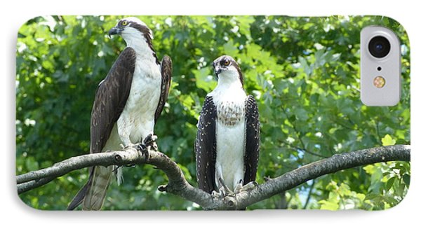 IPhone Case featuring the photograph Two On A Limb - Osprey by Donald C Morgan