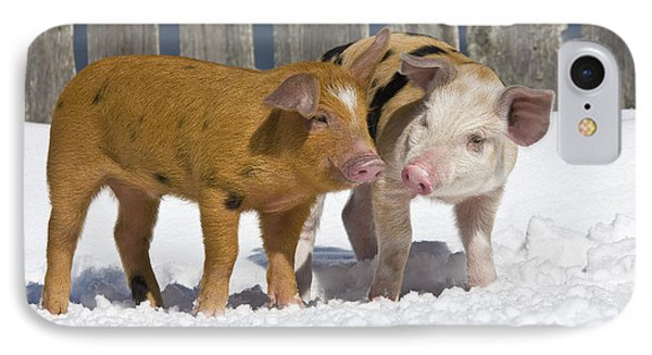 Two Piglets IPhone Case by Jean-Louis Klein & Marie-Luce Hubert