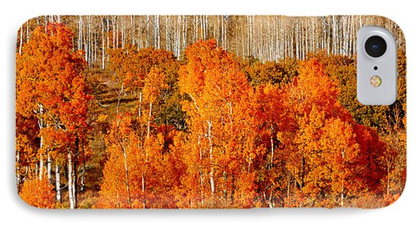 Two Rows Of Aspen IPhone Case by Marcia Socolik