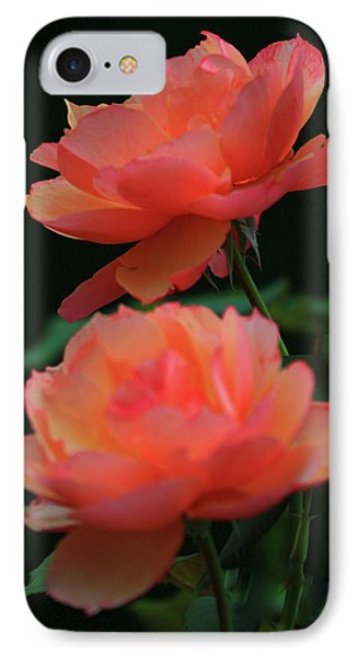 Two Tangerine Roses IPhone Case