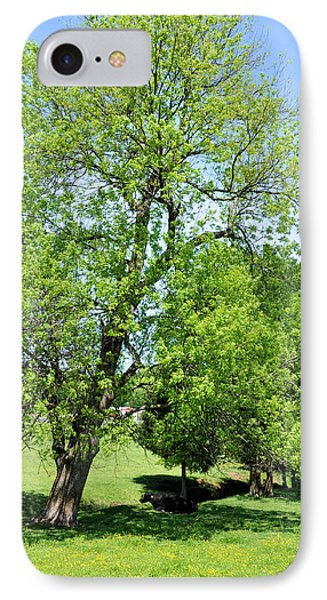 Under The Oak IPhone Case by Jan Amiss Photography