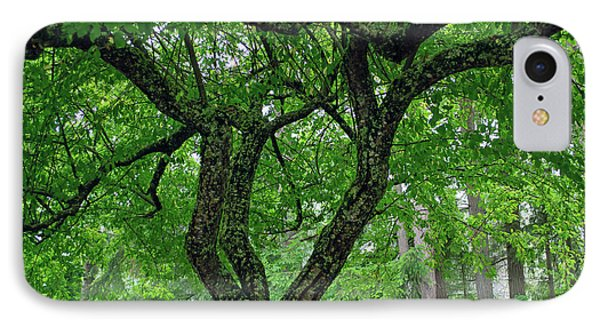 IPhone Case featuring the photograph Under The Shade Tree by Tikvah's Hope