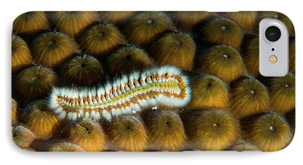 IPhone Case featuring the photograph Undulating Bristle Worm by Jean Noren