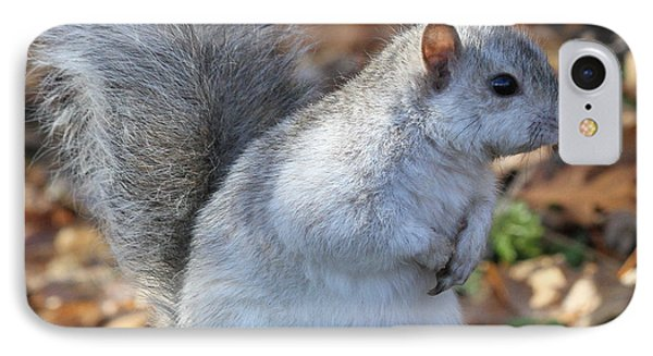 IPhone Case featuring the photograph Unusual White And Gray Squirrel by Doris Potter