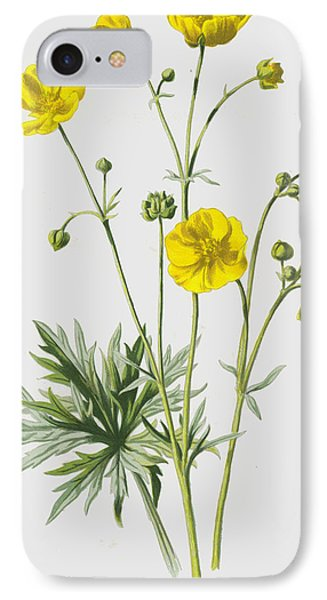 Upright Meadow Crowfoot IPhone Case by Frederick Edward Hulme
