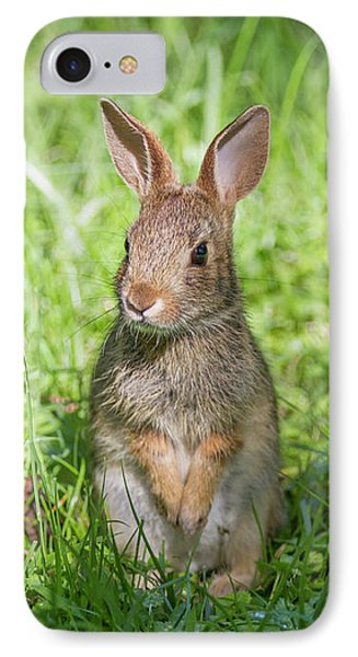 IPhone Case featuring the photograph Upright Rabbit by Chris Scroggins