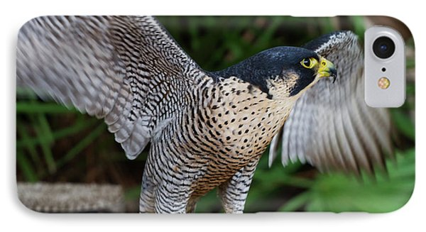 IPhone Case featuring the photograph Upset Peregrine by Arthur Dodd
