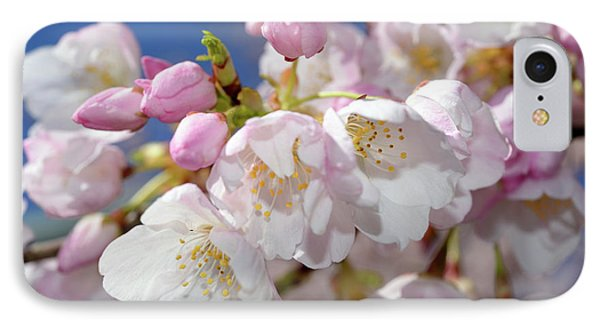 IPhone Case featuring the photograph Vancouver 2017 Spring Time Cherry Blossoms - 7 by Terry Elniski